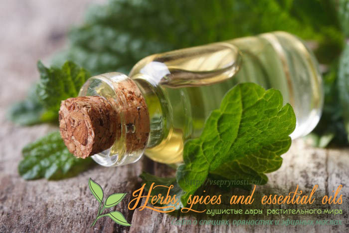 Эфирное масло мяты для кожи