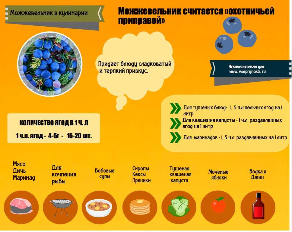Полезная табличка про применение можжевеловых ягод в кулинарии, дозировки способы примененеия