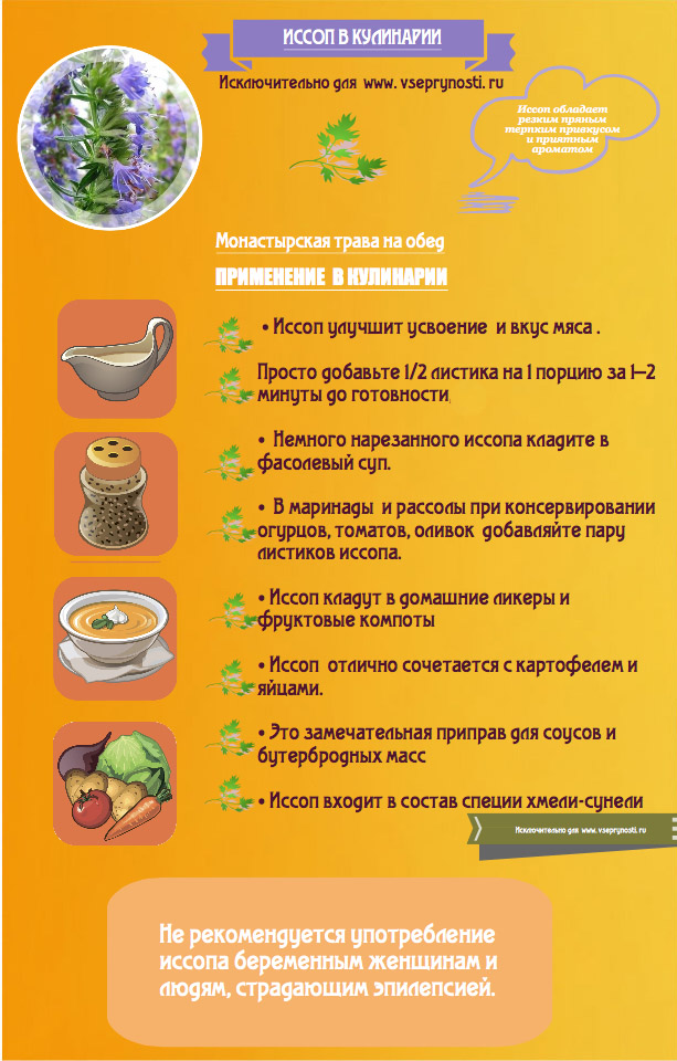 Иссоп в кулинарии - инфографика