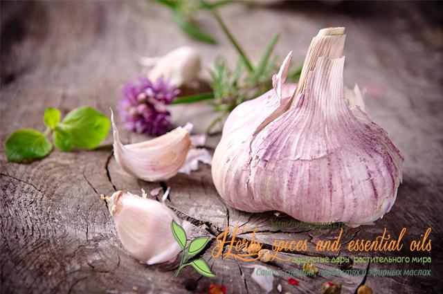 Как быстро убрать, нейтрализовать запах чеснока изо рта: лучшие способы. Что съесть, чтобы не пахло чесноком изо рта? Сколько держится запах чеснока изо рта, через сколько выветривается?