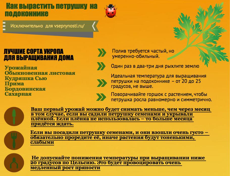 info- petrushka