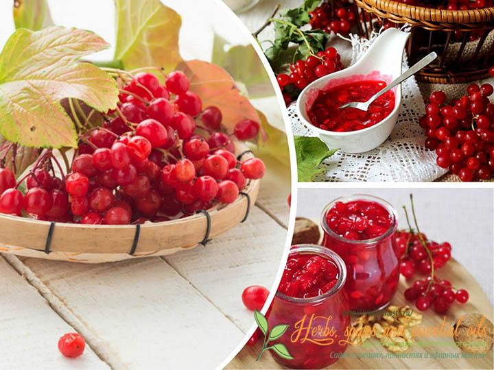 Калина красная полезные свойства ягод калины, рецепты