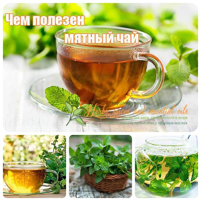 чем полезен бергамот для организма в чае