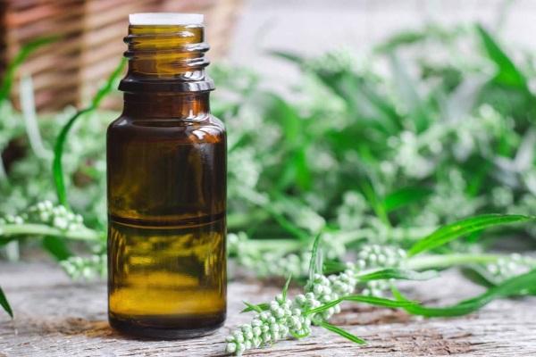 Применение эфирного масла полыни